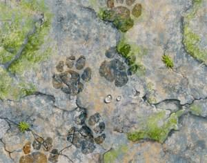 artwork by John Fraser of rock terrain with wet pawprints, pawprints, animals, footsteps, rough terrain, rock landscape