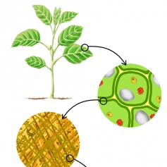 digital illustration by John Fraser showing a Series of close-up views of Plant Composition from the book Idiot's Guide Science Mysteries Explained, plants, close-up view, plant composition, plant DNA, plant building blocks, science illustration