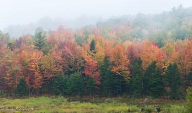 Morning mist in the trees at Windekind Farm in Huntington