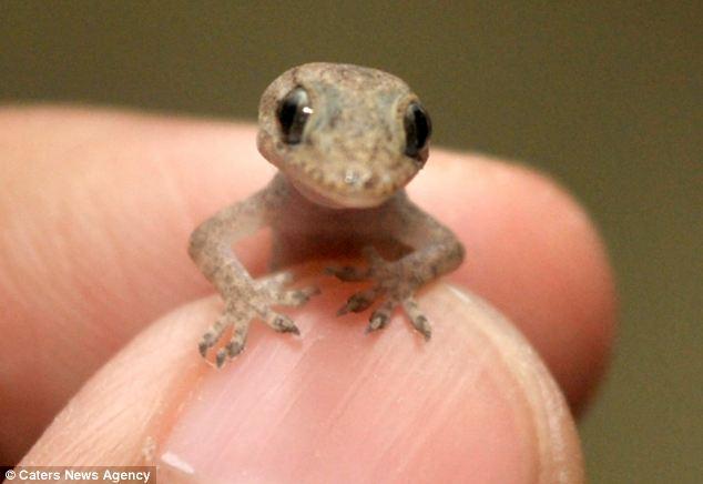 The Tiny Messenger