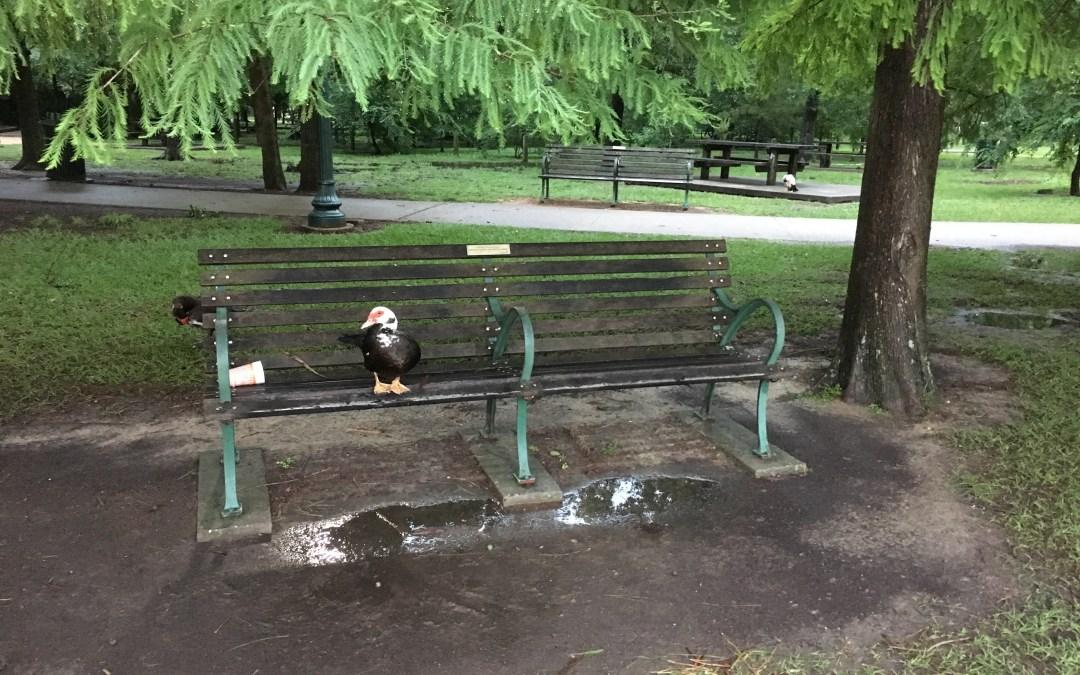 Duck, Duck, Human