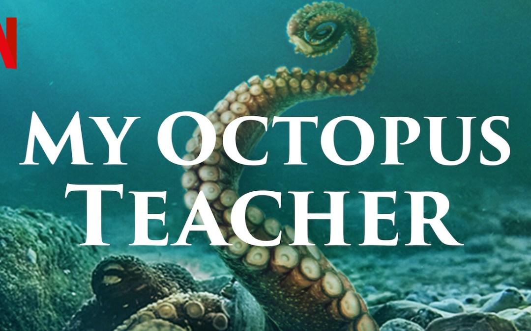 Lessons from an Octopus