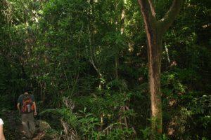 Alvaro Teran leads us through his family's jungle.
