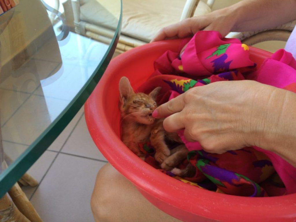 Marina feeding Bolt in the bucket she found for him.