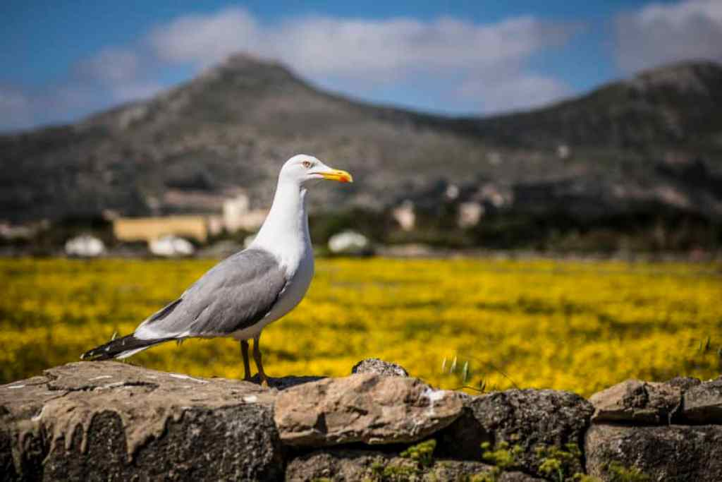 On the road in Favignana. Photo by Marina Pascucci
