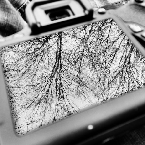Trees reflected off a camera viewing screen
