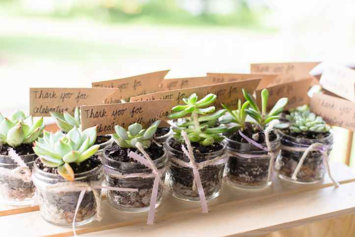 green succulents plants rooting cutting gifts gift