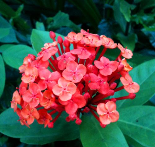 flower-open