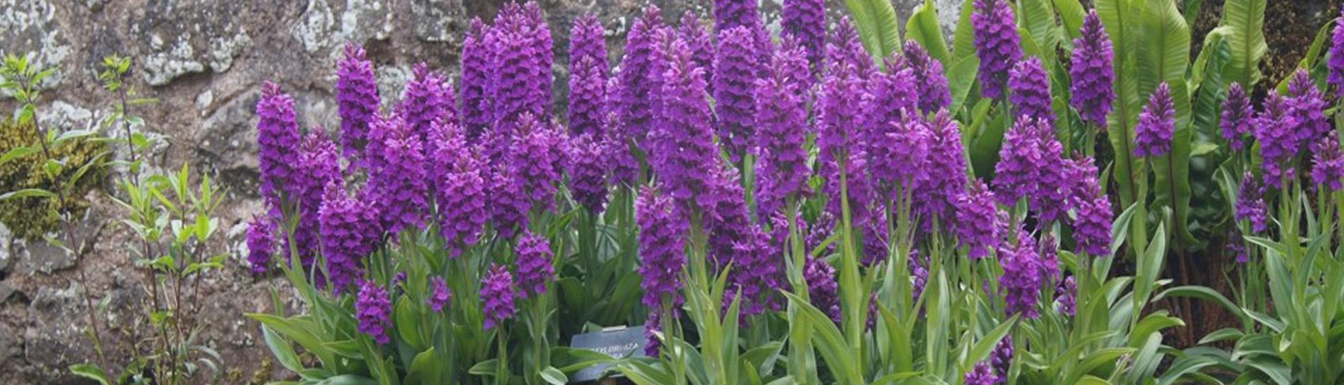 John-Horsey-Horticulture-Gardening-Axminster