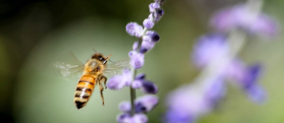 bee 1 of 1 38