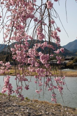 Arashiyama and Beyond