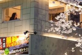 Fast-food and Sakura