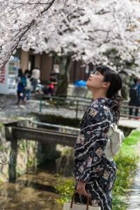 60.01 Hanami along the Philosopher's Path