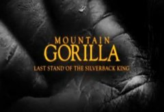 Mountain Gorilla: Last Stand of the Silverback King [2/3]