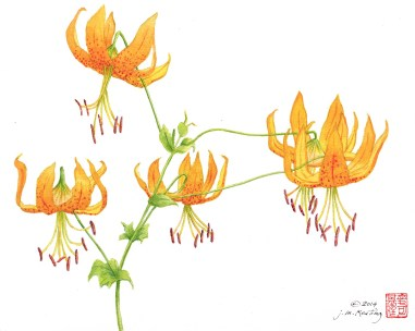 Tiger Lilies - Watercolor - 11 x 15 inches