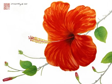 Hibiscus - Watercolor - 12 x 15 inches