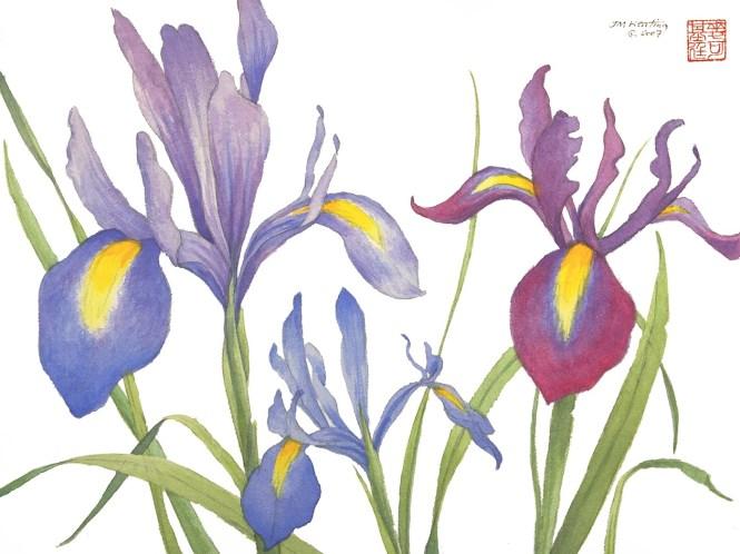 Three Irises - Watercolor - 11 x 15 inches