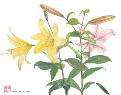 Spanish Lillies - Watercolor - 11 x 15 inches
