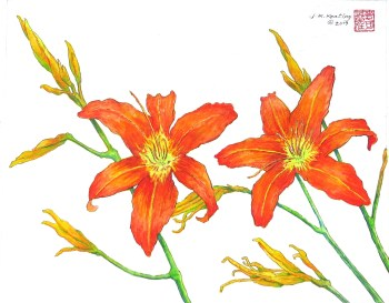 Day Lilies - Watercolor - 7 x 11 inches