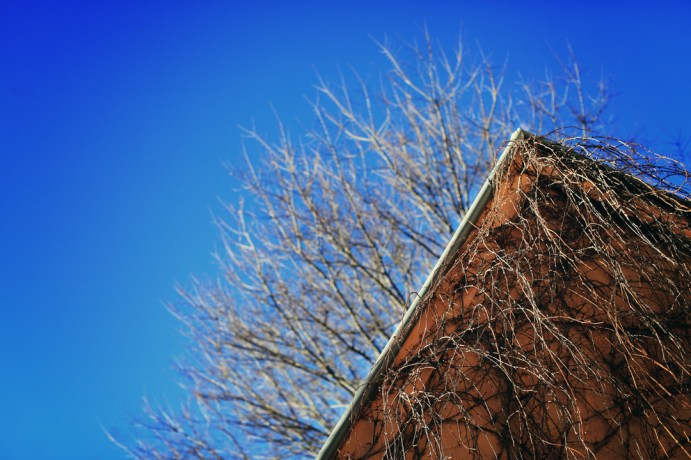 Vine on roof Beechworth