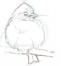 bird sketch 11