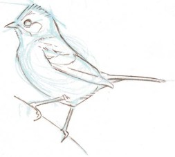 bird sketch 12