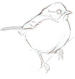 bird sketch 15