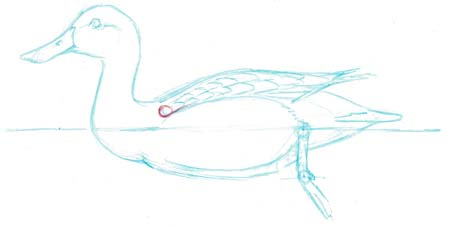 duck shoulder 1
