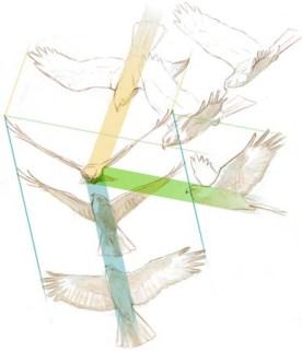 Harrier angles