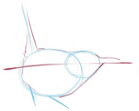 posture wren