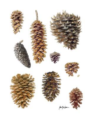 Sierran Pines