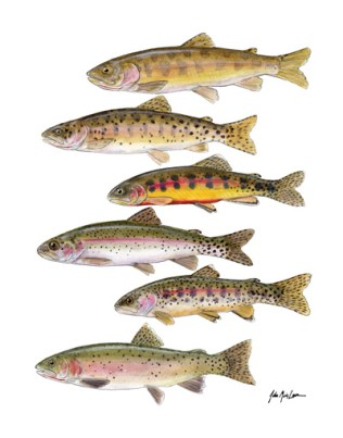 Trout of the Sierra Nevada