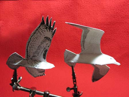 Paper models of birds in flight
