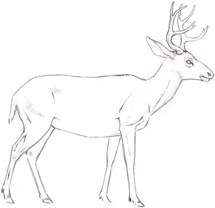 The initial linework suggests a hint of hair texture. Note that texture marks are used sparingly. Most of the outline is a smooth contour.