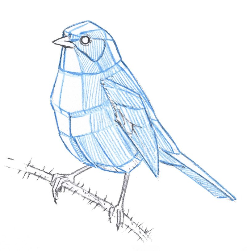 How to Draw Birds at All Angles