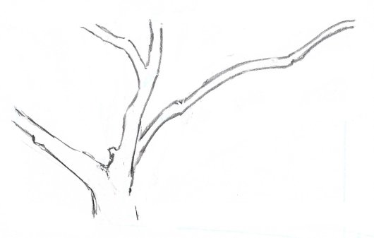 How to draw tree trunks start with the part of the trunk that is the closest to you use greater