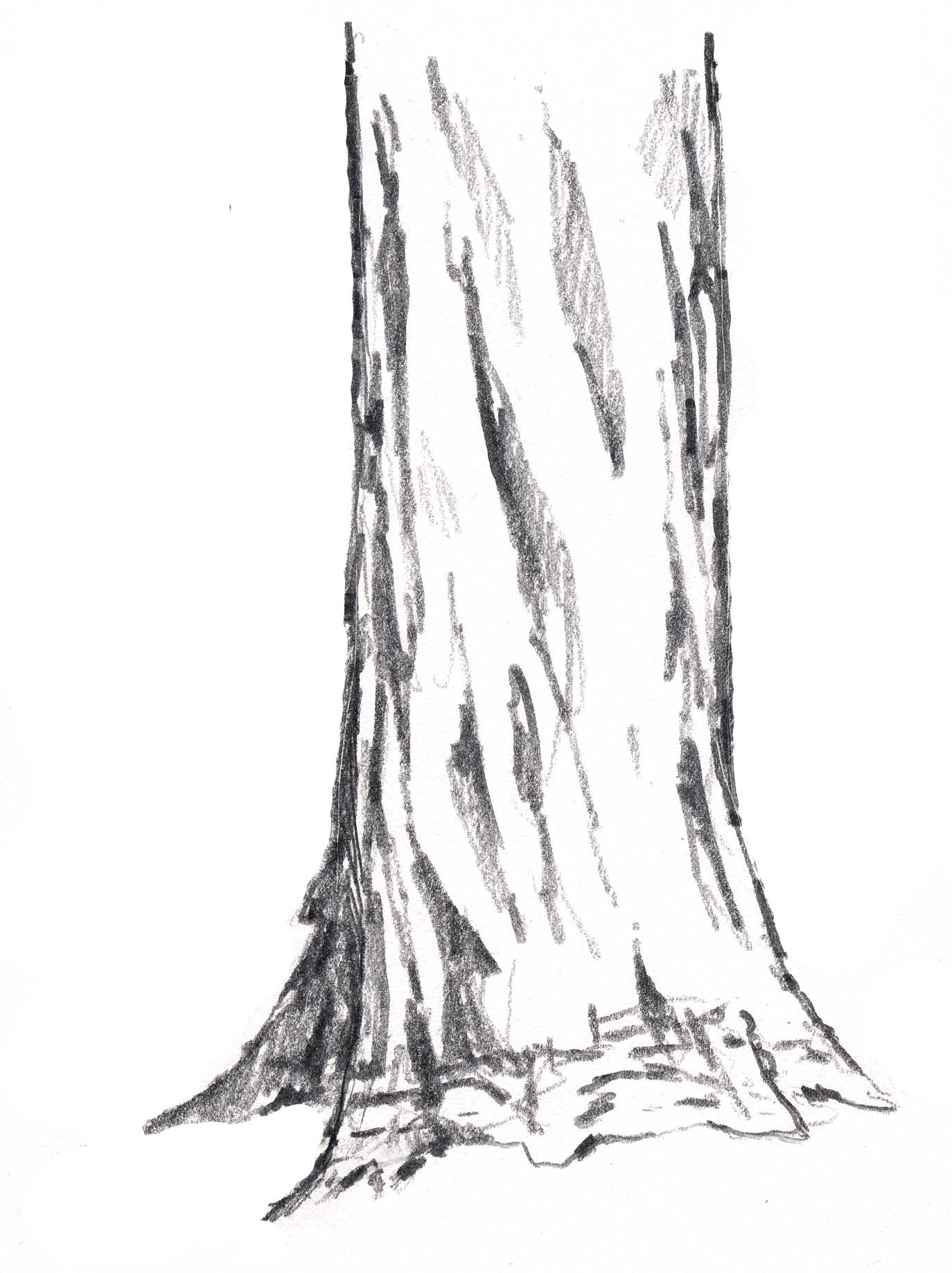 how to draw tree trunk drawing sketch coloring page