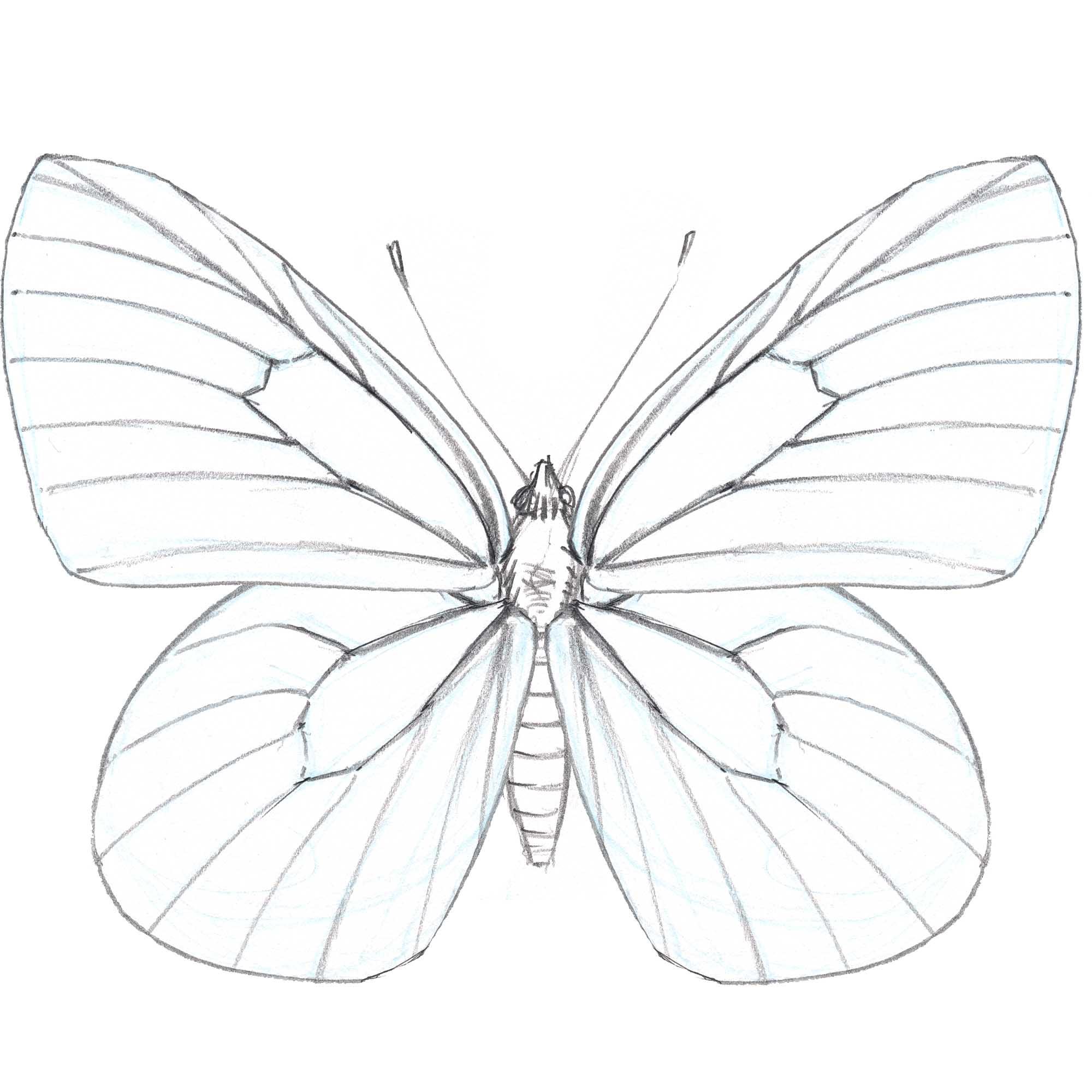 butterfly pinned john muir laws