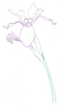 Outline the petals and sepals with a sharp Verathin pencil. Use less pressure on the elements in the background to suggest depth. Add a hint of a shadow below the flower with dull purple. Use an embossing stylus on the petal edges that point toward the viewer and to create fine white lines around front sepal.