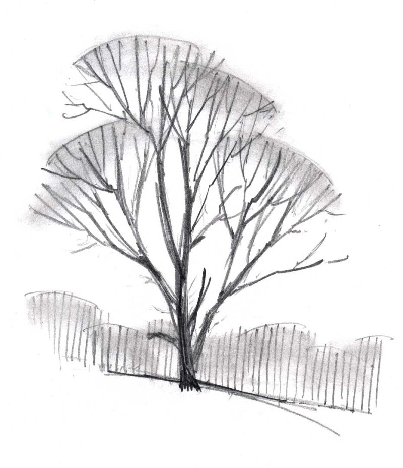 Drawing Deciduous Trees (video)