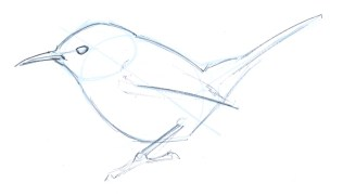 If you make your first lines lightly (or with an erasable non-photo blue pencil) you can draw directly over these lines to start to bring your bird to life. Start lightly. The first lines you put down are the ones that you are most likely going to want to change down the line).