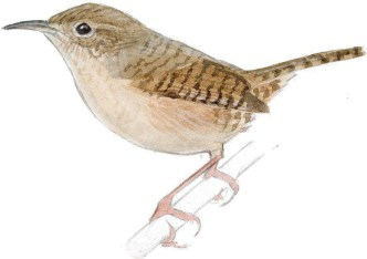 How does this wing fit with the body? What is suggested vs. delineated?