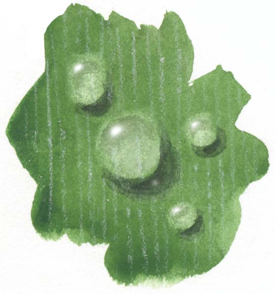 How to Paint Raindrops and Dew