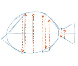 The second detail to notice to help you place the fins is to compare where each fin intersects the body while comparing the top and the bottom fin positions. Does the ventral fin start in front of or behind the dorsal fin?