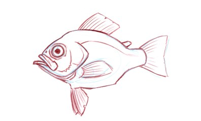 Ventral or Pelvic Fins: In some fish (e.g. cod) the pelvic fins are forward of the pectoral fins.