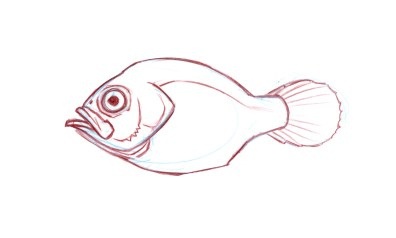 Tail: Tails come in all sorts of shapes. A round tail is good for bursts of speed but the back edge of the tail creates drag and would burn a lot of energy in long distance (open water) swimming. Expect this tail type in fish who might hide among rocks and dart from one retreat to another.