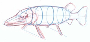 If you are going to add shading, light, details to the body keep in mind that the fish is a three dimensional shape. Visualize a set of ovals through the body.