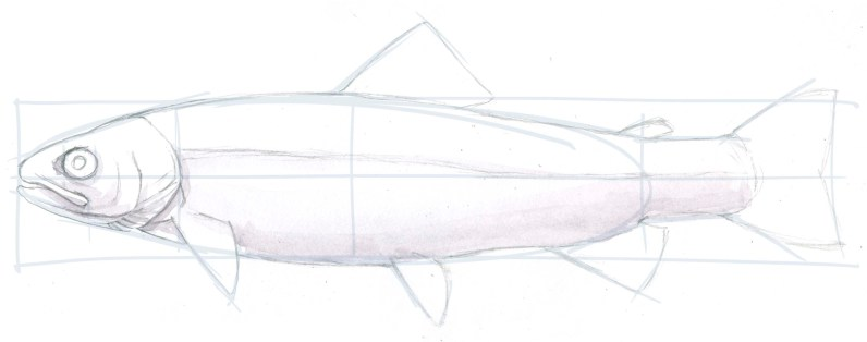 Start painting the fish with the shadow, here I use Daniel Smith Shadow Violet.