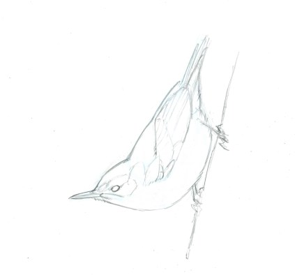 Start with a clear line drawing of the bird you want to draw. For this project, you may download and print out this drawing.