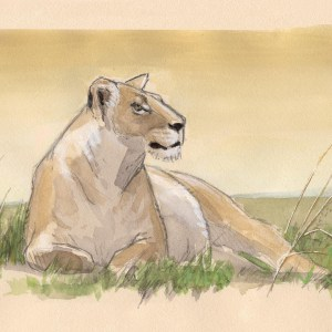 lioness 11